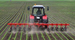 Suzbijanje korova u kukuruzu