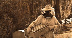 kada i kako vrcati med