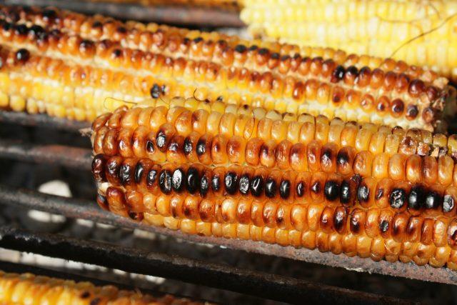 Zarazeni kukuruz secerac iz Madjarkse