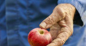 Kako podići intezivan zasad jabuka?