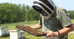 Mravlja kiselina protiv varoe