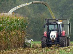 Silaža kukuruza