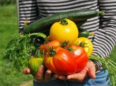 Kako se slažu pojedine biljne vrste?
