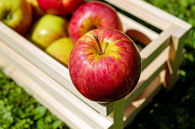 Proizvodnja jabuka
