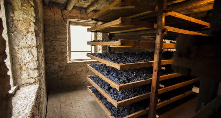 Priprema podruma za grožđe