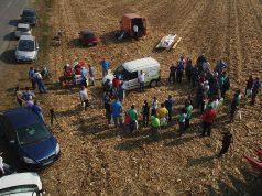 Ogledno polje kukuruza