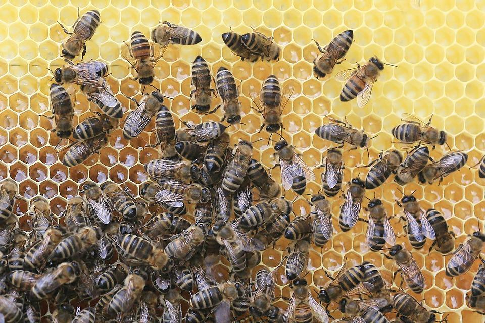 Pčelinja zajednica mora biti zdrava