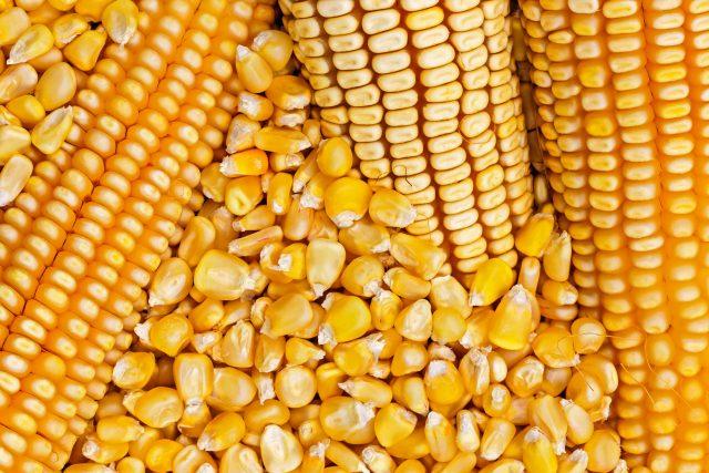 Kako najjeftinije skladisti kukuruz