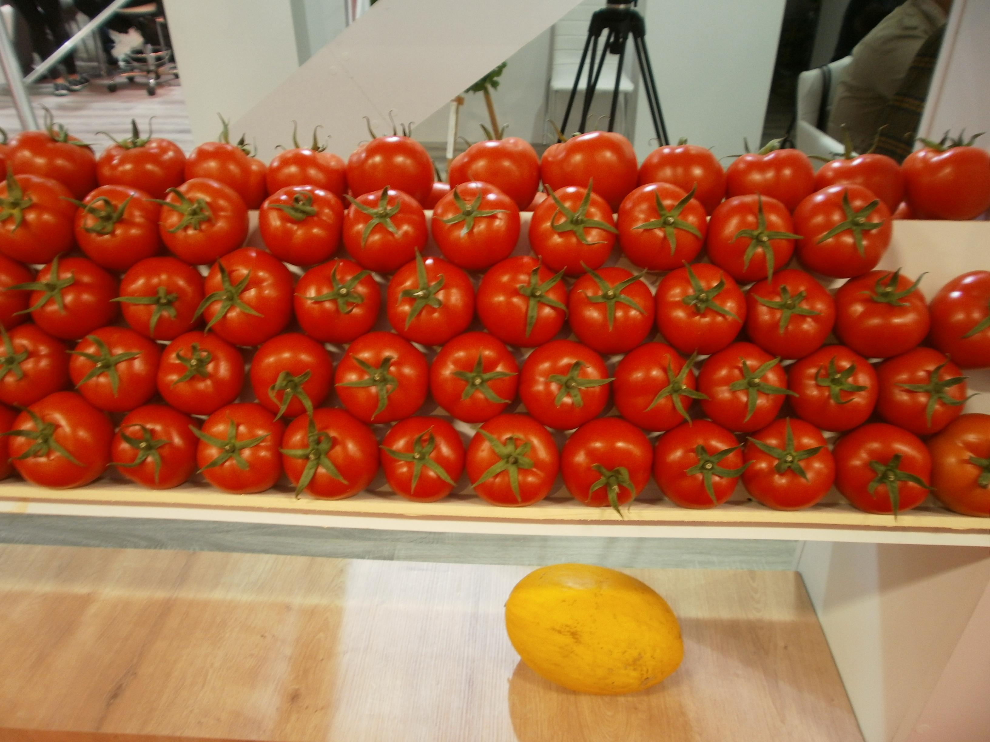 turski paradajz na sajmu