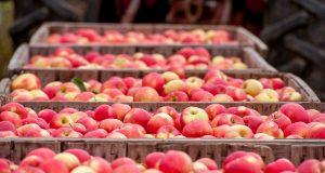 Izvoz i skladistenje jabuke