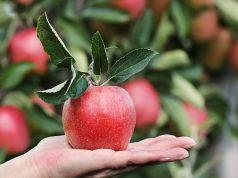 Cena jabuke 2019