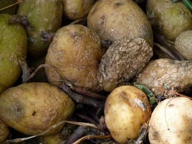 Truli krompir