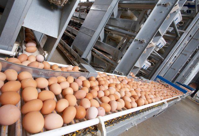 Nova pravila u proizvodnji jaja