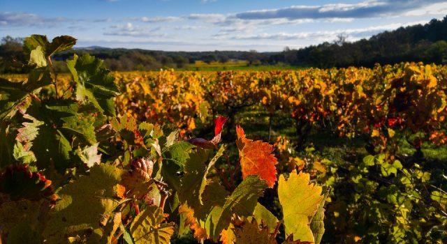 Bespovratna pomoc za vinogradare