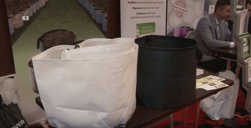 saksije za masovni uzgoj borovnice