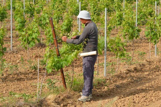 angažovanje sezonskih radnika