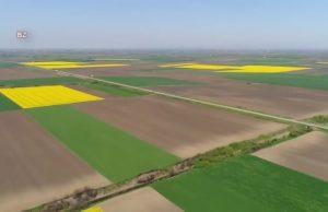 polja uljane repice