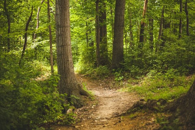 sačuvajmo naše šume