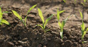 """""""Pametni herbicidi"""" kao rešenje za svaku njivu"""