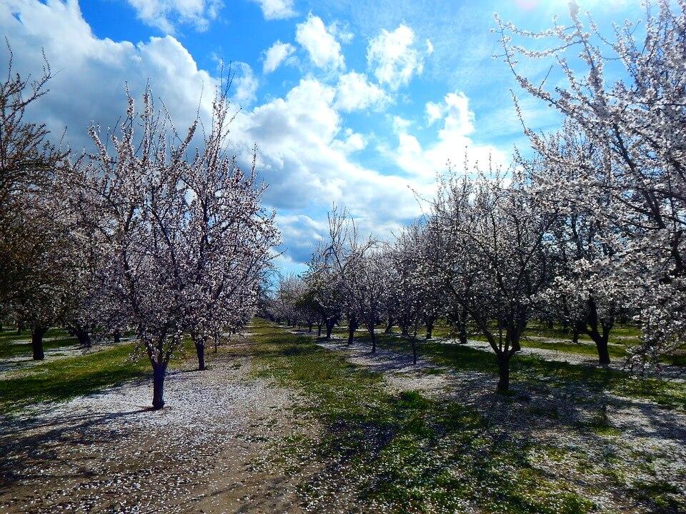 Noviteti u proizvodnji bobičastog voća