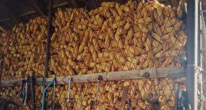 foto: J. El Omari, cenu kukuruza diktiraće inostrani kupci