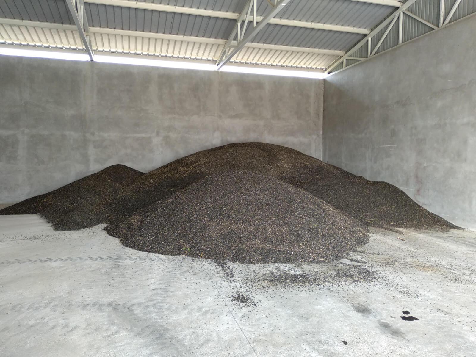 foto: već otkupljeno 500 t suncokreta
