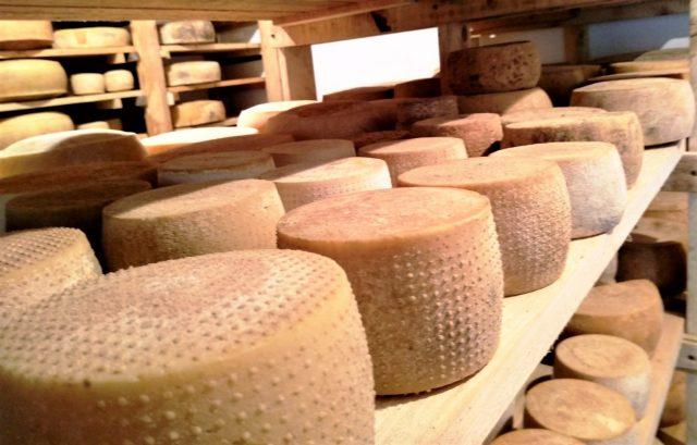 koziji sirevi