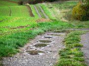 foto: Pixabay, kiša koja je pala protekle noći u pojedinim delovima Srbije po svemu sudeći biće dovoljna da ohrabri mnoge poljoprivrednike da krenu sa setvom pšenice