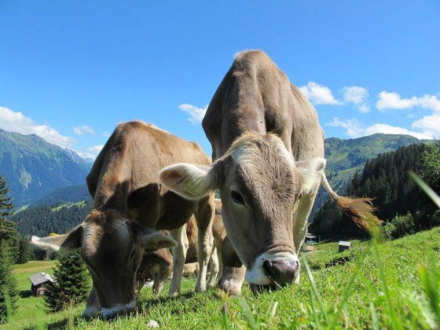 foto: Pixabay, u Austriji farmeri pružaju usluge koje imaju značajan udeo i u drugim granama privrede